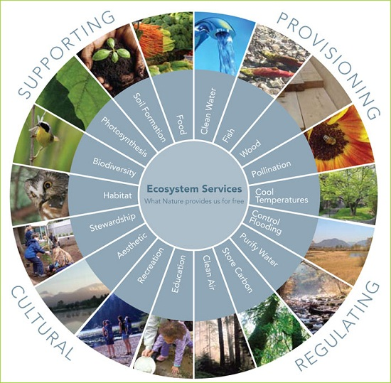 Ecosystem Services © metrovancouver.org