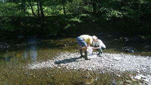 Riverfly surveying on the River Kent